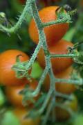 Pest & Pesticide Free Gardens